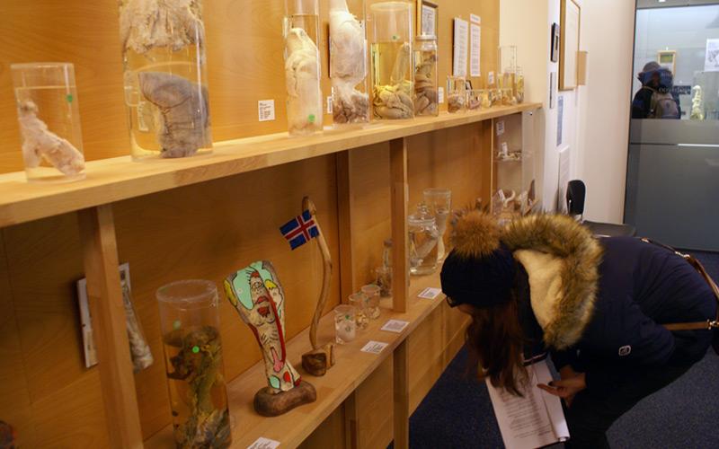 Iceland Phallogical Museum